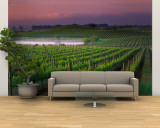 Sunrise in Distant Fog, Carnaros, Napa Valley, California, USA Wall Mural – Large by Janis Miglavs