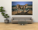 Mother Cheetah with Cub on Dirt Mound, Masai Mara National Reserve, Rift Valley, Kenya Wall Mural by Mitch Reardon