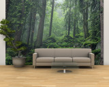 Moss-Covered Rocks Fill a Misty Wooded Hillside Wall Mural – Large