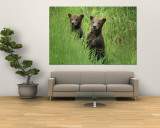 Alaskan Brown Bear Cubs Wait in Long Grass for Their Mother Mural por Michael Melford
