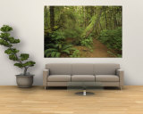 A Trail Cuts Through Ferns and Shrubs Covering the Rain Forest Floor Vægplakat af Jim Sugar