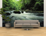 Woodland Stream and Rapids, Time Exposure Wall Mural – Large by Norbert Rosing