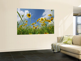 A Skyward View of Coreopsis Flowers in a Texas Field Wall Mural by Joel Sartore