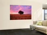 Sunset Over Lone Tree in Paddock, Rochester, Australia Wall Mural by Will Salter