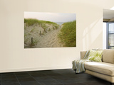 Path at Head of the Meadow Beach, Cape Cod National Seashore, Massachusetts, USA Wall Mural by Jerry & Marcy Monkman