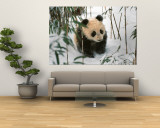 Panda Cub on Snow, Wolong, Sichuan, China Reproduction murale géante par Keren Su