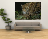 A Close View of a Captive Jaguar, Panthera Onca Wall Mural by Tim Laman