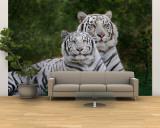 White Phase of the Bengal Tiger Fototapeta – duża autor Adam Jones