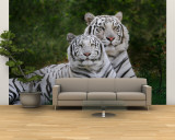 White Phase of the Bengal Tiger Wall Mural – Large by Adam Jones