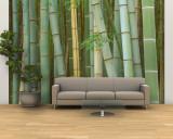 Bamboo Forest, Kyoto, Japan Fototapete – groß von Rob Tilley