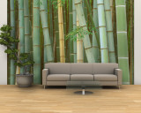 Bamboo Forest, Kyoto, Japan Wall Mural – Large by Rob Tilley