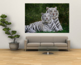 White Phase of the Bengal Tiger Wall Mural by Adam Jones