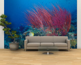 Coral Reefs, Papua, Indonesia Wall Mural – Large by Michele Westmorland
