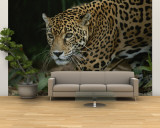 A Close View of a Captive Jaguar, Panthera Onca Wall Mural – Large by Tim Laman