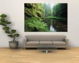 Blick auf einen Wald mit Farn an einem Flussufer Fototapete von Norbert Rosing
