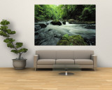 Woodland stream and rapids, time exposure Mural por Norbert Rosing