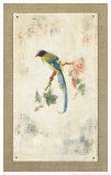 Blue Magpie Print by Jillian David