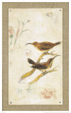 Long-Billed Sunbird Prints by Jillian David