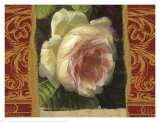 Classic White Rose Prints by Tony Lupas