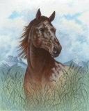 Appaloosa Portrait Posters by Ron Jenkins