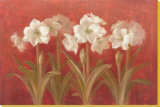 White Amaryllis on Red Stretched Canvas Print by Danhui Nai
