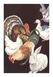 Domestic Barnyard Animals, Art Print