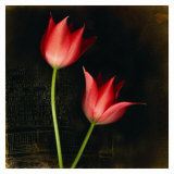 Species Tulips Posters by Rick Filler