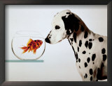 Dalmation Dog Looking at Dalmation Fish Art by Michel Tcherevkoff