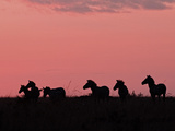 Burchell&#39;s Zebras Silhouetted in the Morning Sky of the Maasai Mara, Kenya Photographic Print by Joe Restuccia III
