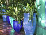 Jardin Majorelle and Museum of Islamic Art, Villa Pottery, Marrakech, Morocco Photographic Print by Walter Bibikow