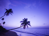 Lone Palm Trees at Sunset, Coconut Grove Beach at Cade's Bay, Nevis, Caribbean Photographic Print by Greg Johnston