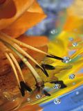 Abstract of Lily Stamens in Reflection Photographic Print by Nancy Rotenberg