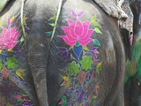 Elephant Decorated with Colorful Painting at Elephant Festival, Jaipur, Rajasthan, India Lámina fotográfica por Keren Su