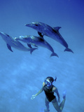 Atlantic Spotted Dolphins, Bimini, Bahamas Photographic Print by Greg Johnston