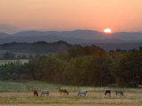Horses Graze at Sunrise, Provence, France Fotografie-Druck von Jim Zuckerman