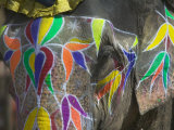 Elephant Decorated with Colorful Painting, Jaipur, Rajasthan, India Photographie par Keren Su