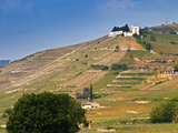 Hermitage Vineyards Behind Tain-L&#39;Hermitage, Drome, France Photographic Print by Per Karlsson