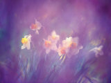 Abstract of Daffodils, New Brunswick, Canada Photographic Print by Charles R. Needle