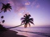 Palm Trees at Sunset, Coconut Grove Beach at Cade's Bay, Nevis, Caribbean Photographic Print by Greg Johnston