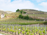 Le Pavillon Vineyard with Domaine M Chapoutier, Tain L'Hermitage, Drome, France Photographic Print by Per Karlsson