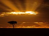 Sunrise, Maasai Mara, Kenya Fotografisk trykk av Joe Restuccia III