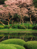 Reflecting Pond, Imperial Palace East Gardens, Tokyo, Japan Photographic Print by Nancy &amp; Steve Ross