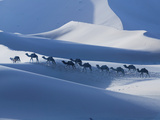 Camel Caravan on the Erg Chebbi Dunes, Merzouga, Tafilalt, Morocco Photographic Print by Walter Bibikow