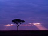 Sunrise, Maasai Mara, Kenya Photographic Print by Joe Restuccia III