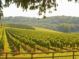 Vineyard and Valley with Forest, Chateau Carignan, Premieres Cotes De Bordeaux, France Photographic Print by Per Karlsson