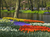 Tulips and Daffodils in Bloom in Keukenhof Gardens, Amsterdam, Netherlands Photographic Print by Keren Su