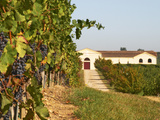 Vineyards, Petit Verdot Vines and Winery, Chateau De La Tour, Bordeaux, France Photographic Print by Per Karlsson