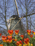 Windmill with Tulips in Keukenhof Gardens, Amsterdam, Netherlands Photographic Print by Keren Su