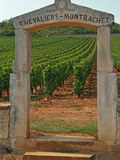 Stone Portico to the Vineyard Chevalier-Montrachet, Chartron Dupard, France Photographie par Per Karlsson