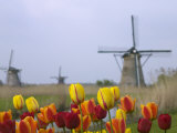 Windmills and Tulips Along the Canal in Kinderdijk, Netherlands Photographic Print by Keren Su